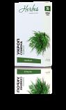 Dill /Anethum graveolens